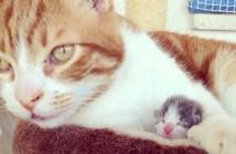 猫のお父さんに育てられた子猫
