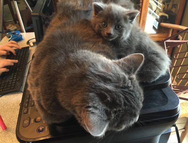 いっしょにくつろぐ猫
