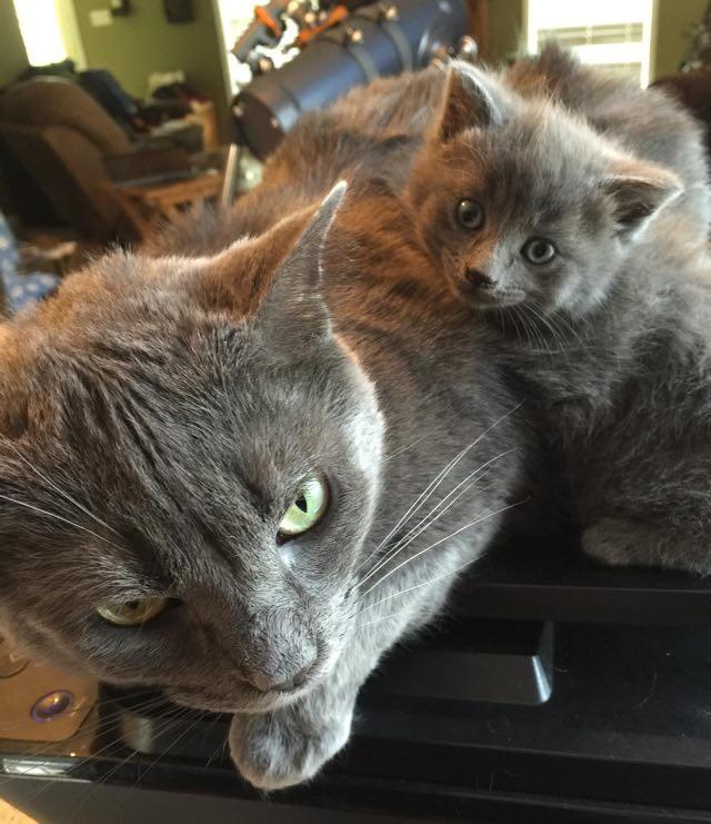 こちらを見上げる猫