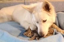 子猫を迎え入れる犬