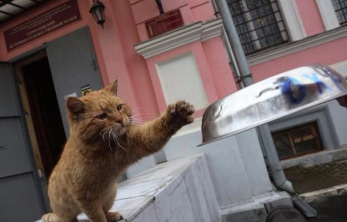 エサが欲しい猫