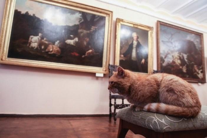 博物館の中を楽しむ猫