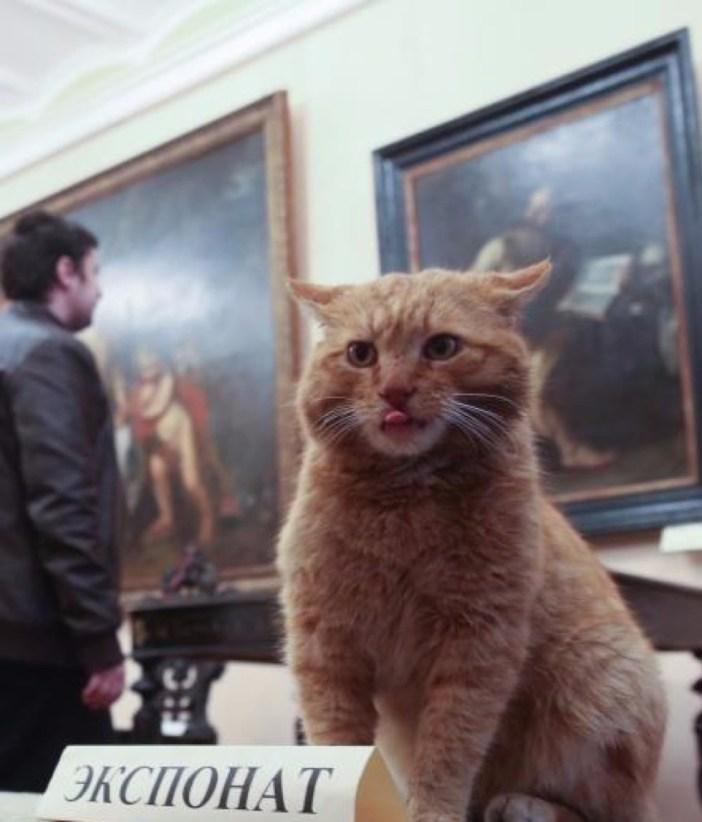 博物館で仕事をする猫