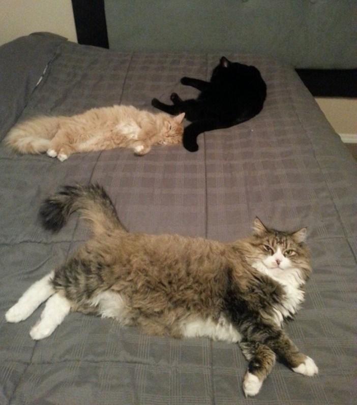 みんなで昼寝する猫