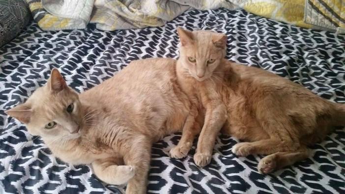 いっしょにくつろぐ2匹の猫