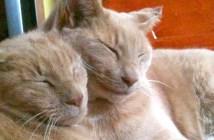3年ぶりに出会った2匹の猫