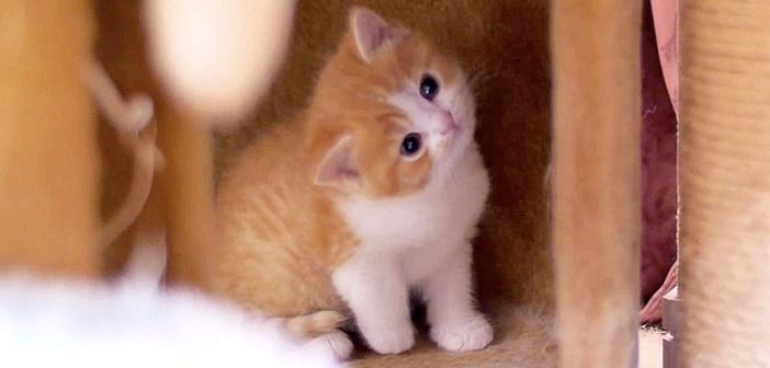 ミルクの時間に現れない子猫