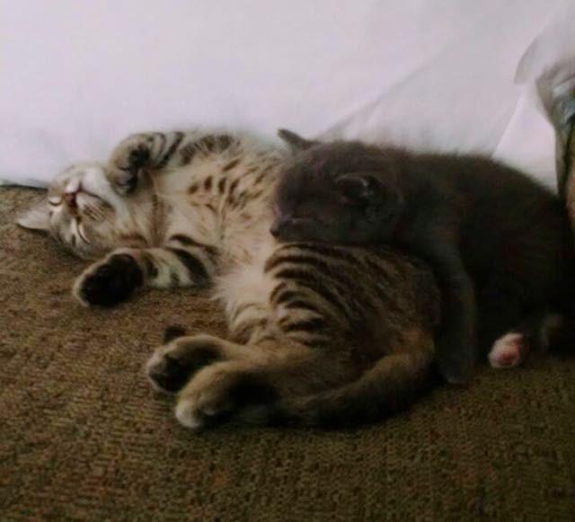 一緒に眠る二匹