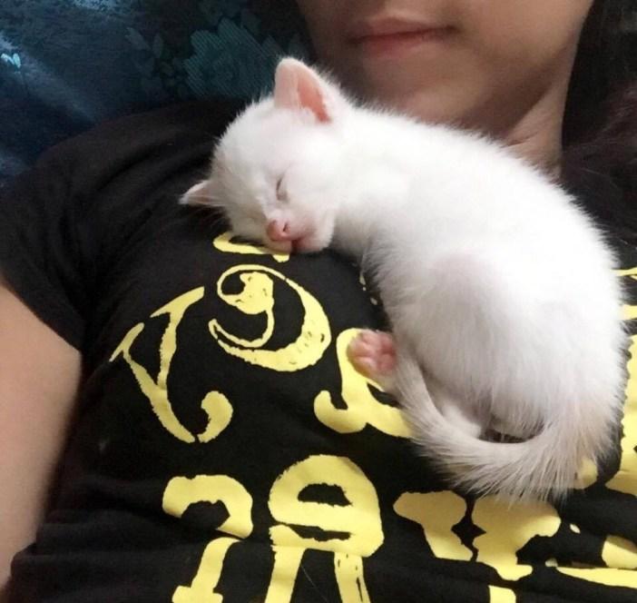 身体の上で眠る子猫