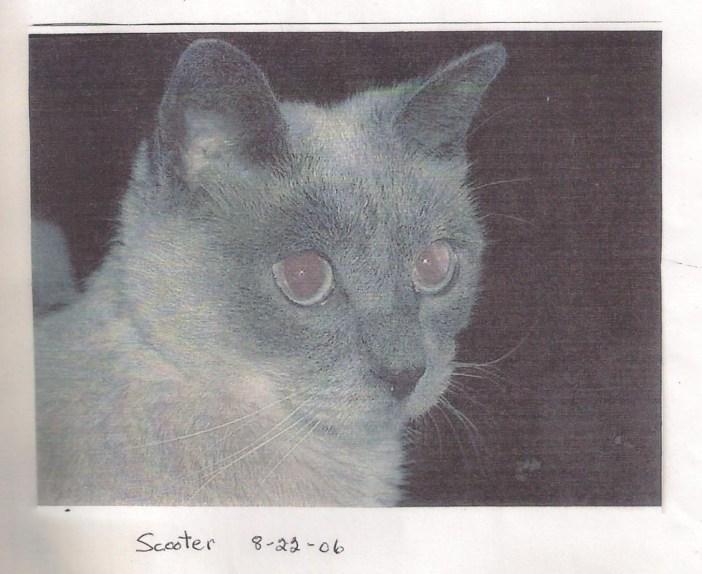 世界最高齢の猫30歳