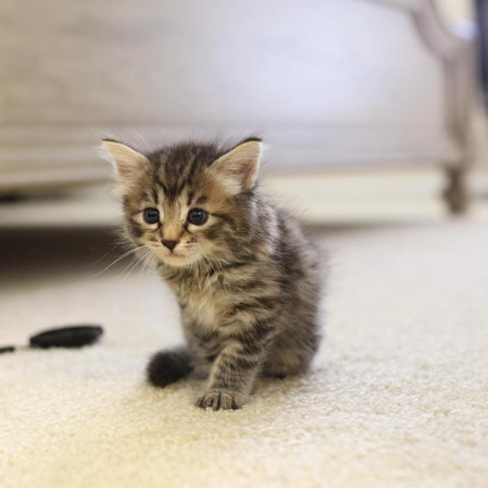 少し成長した子猫