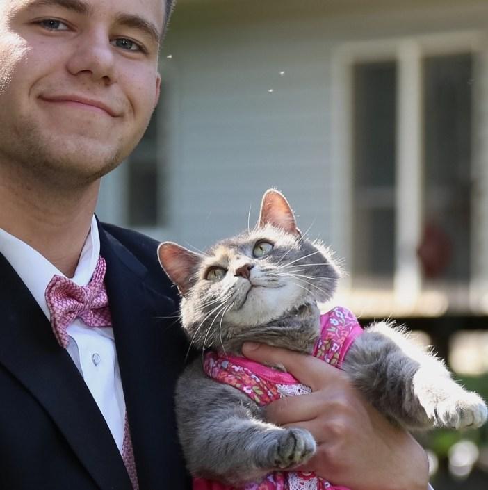 男性を見上げる猫