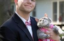 ダンスパーティーと猫