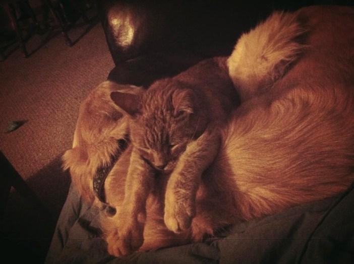 いっしょの時間を過ごす犬と猫