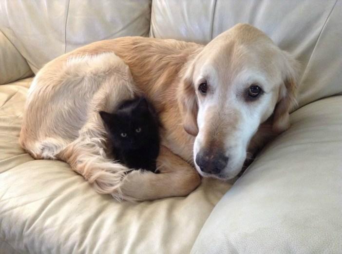 犬に抱っこされる黒猫