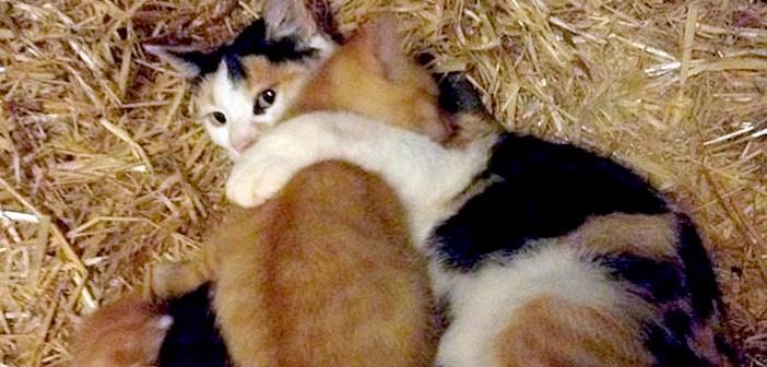 大きな子猫の面倒を見る母猫