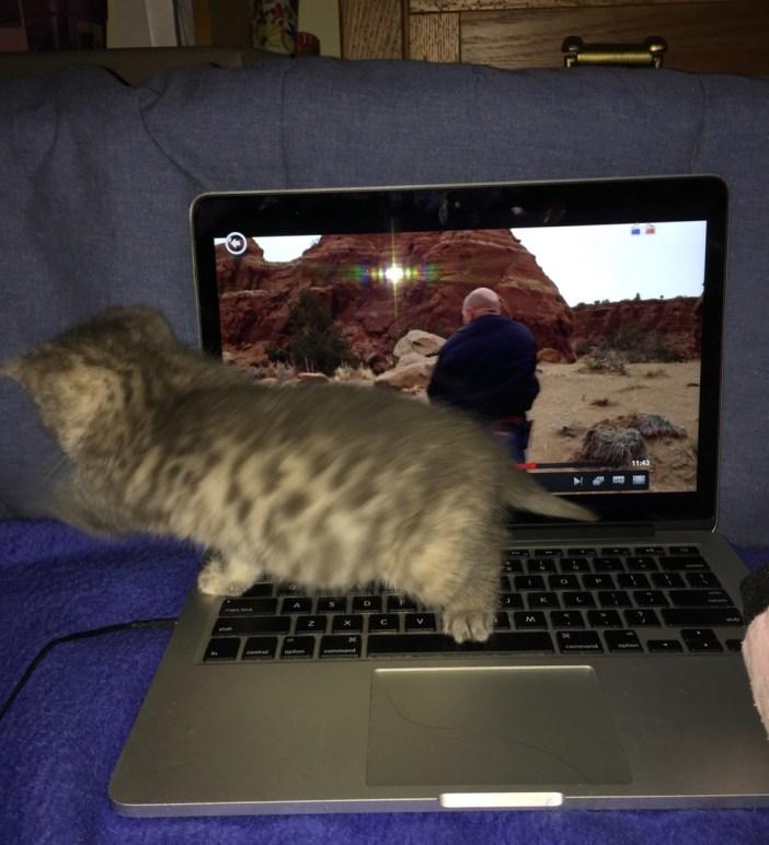 パソコンと子猫
