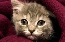 拾われた子猫