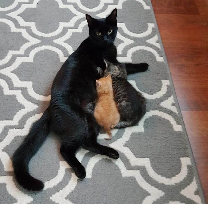 子猫にミルクを与える母猫