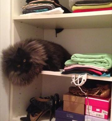 垂れてる猫