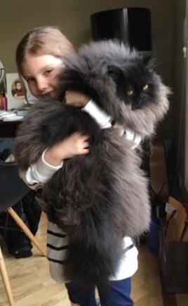 抱き抱えられる猫