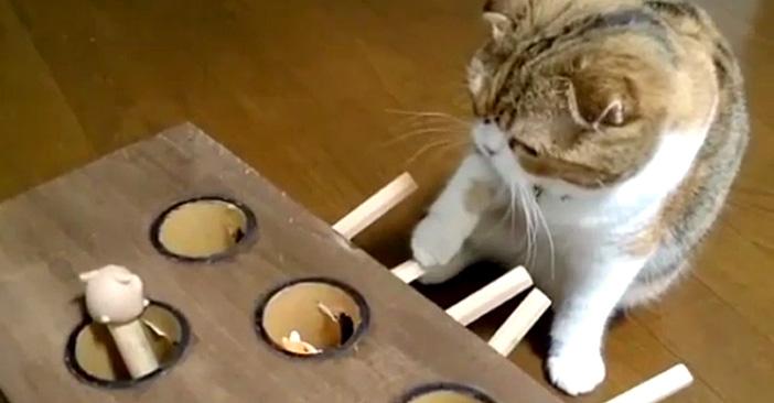 モグラたたき猫