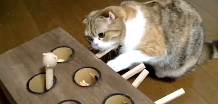 ひとりモグラたたき猫