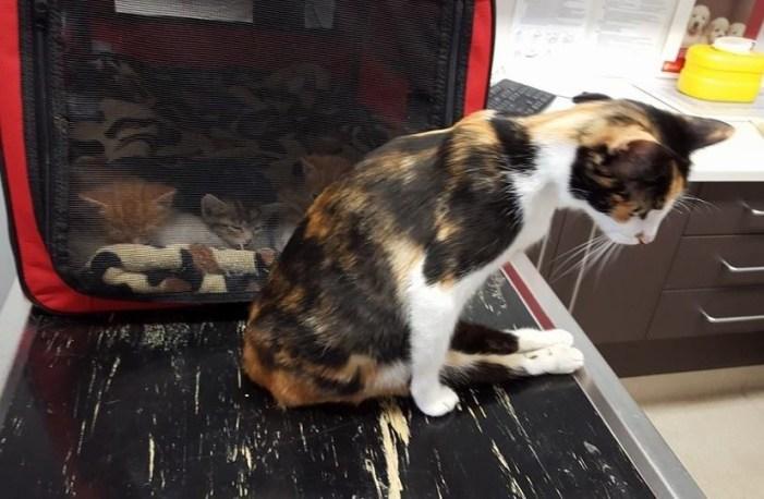 下半身麻痺した母猫