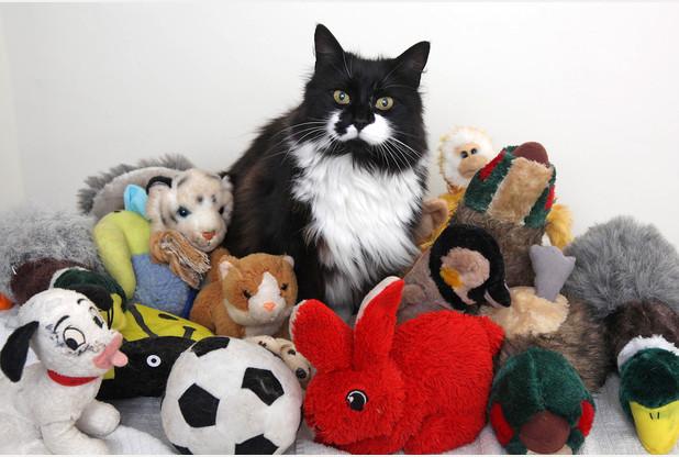 猫のミリー