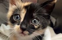 ゴミ箱から救われた子猫