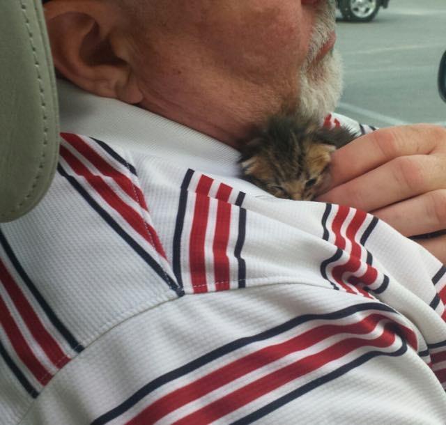 子猫を助けた男性