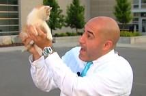生放送中に保護された子猫