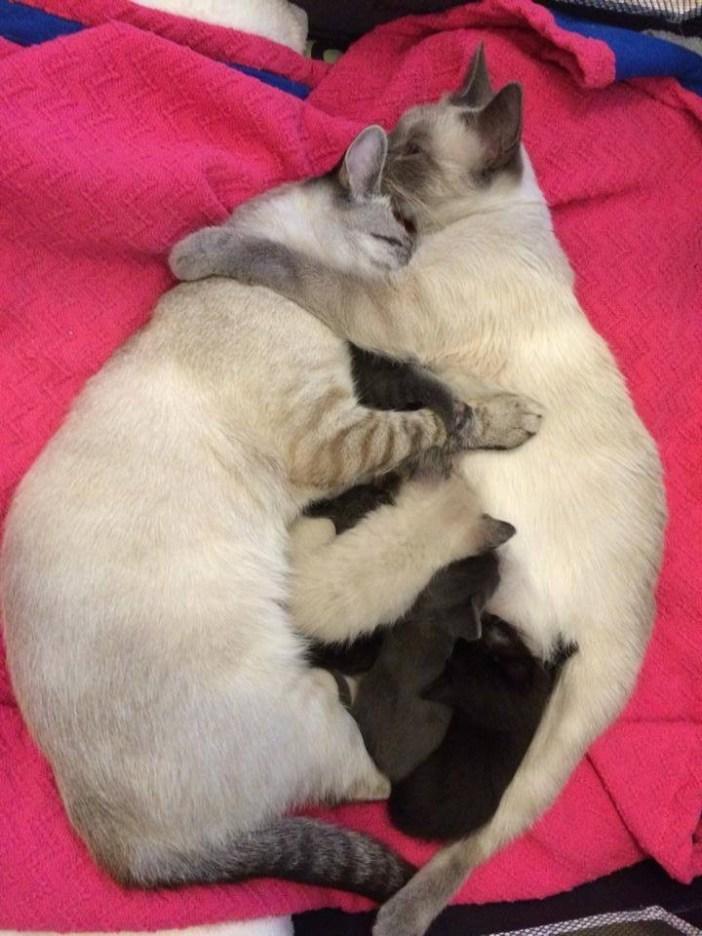 みんなで抱きしめる猫