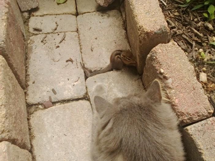 リスを発見した猫