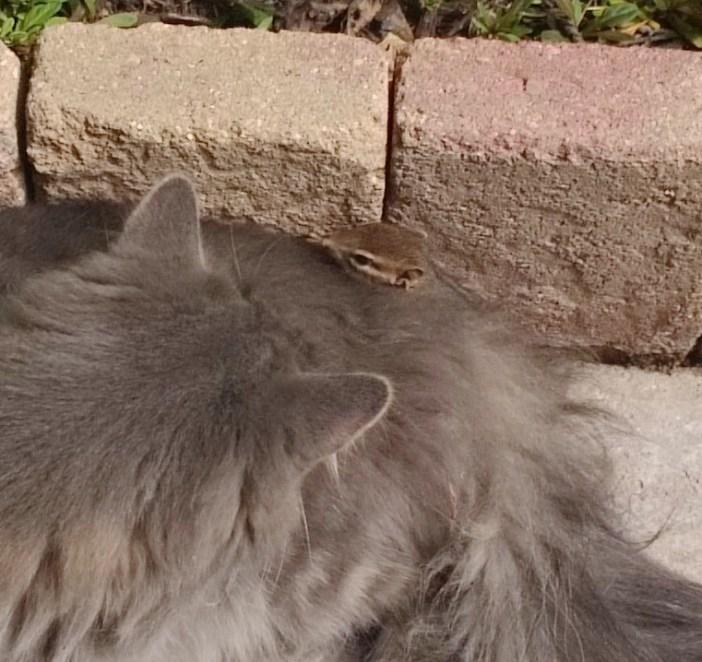 楽しそうなリスと猫