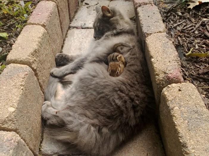 猫の上に乗るリス