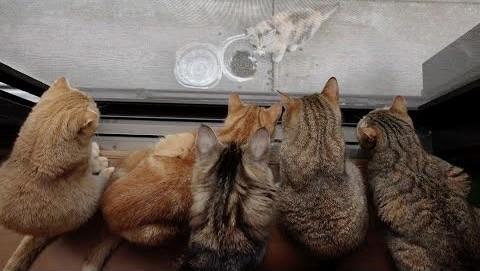野良猫を見つめる10匹の猫