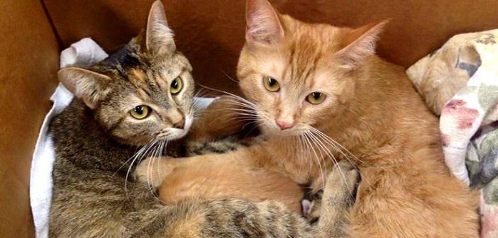 子猫をいっしょに育てる母猫