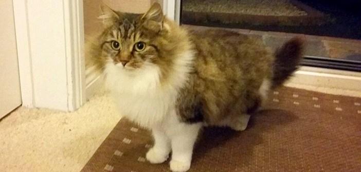 家を訪ねてきた野良猫