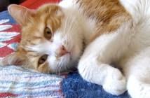 お昼寝前にお話しする猫