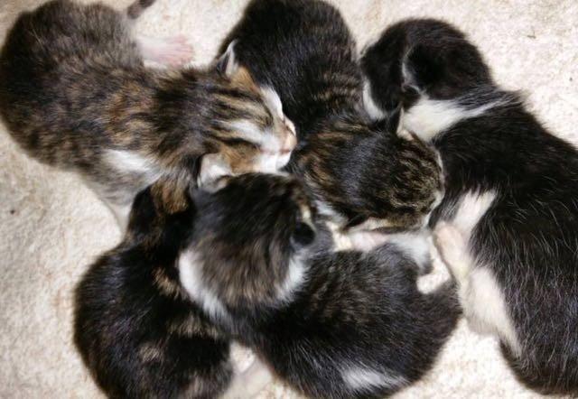 子猫いっぱい