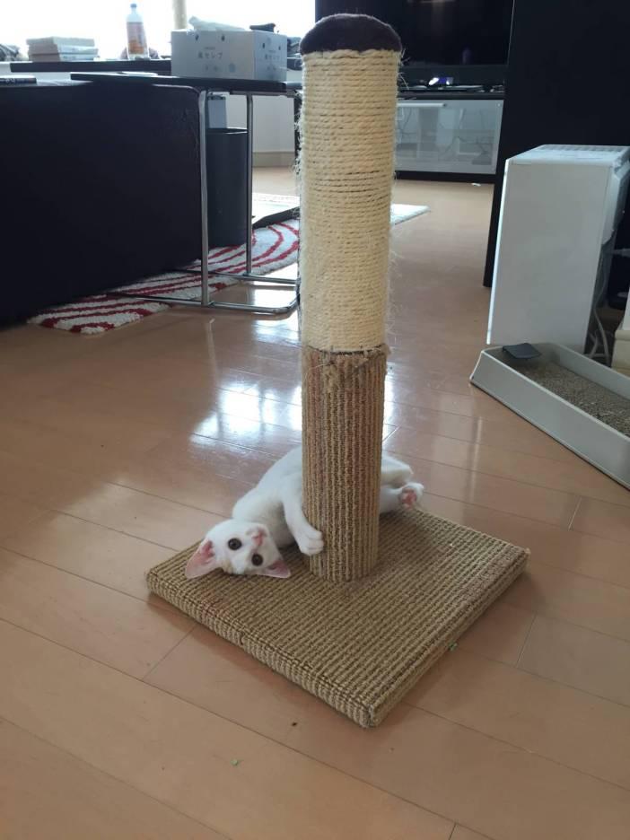 爪研ぎと子猫
