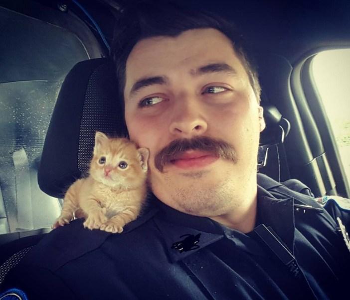 警官に助けられた子猫