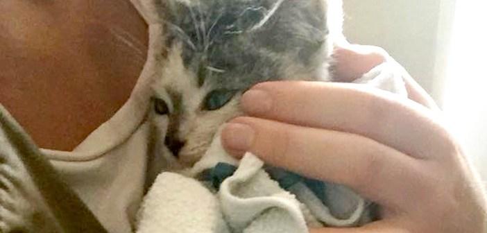冠水した道路から子猫を救助