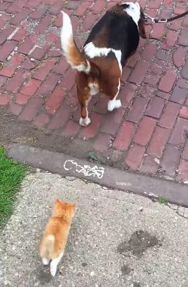 犬についてくる子猫