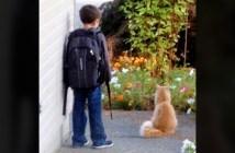 スクールバスを待つ猫と少年