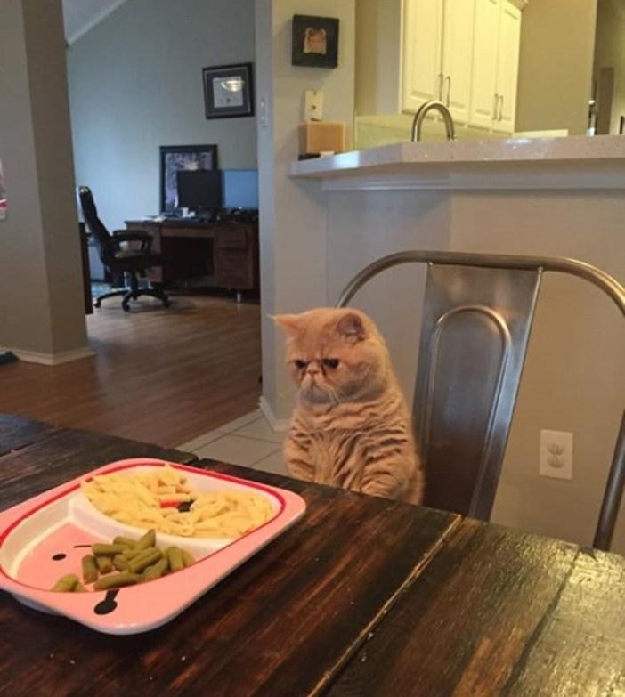 食べ物を狙う猫