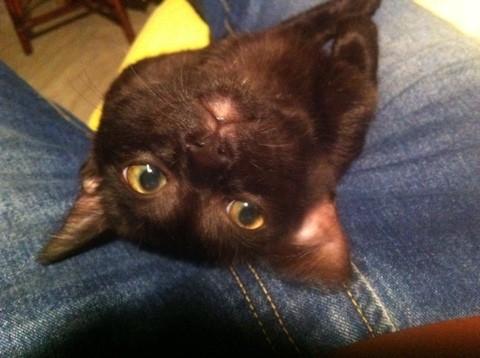 見えゲル黒猫