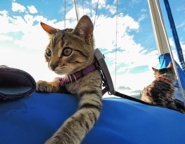 飛行機になる猫