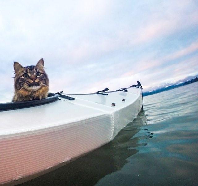 カヌーに乗る猫